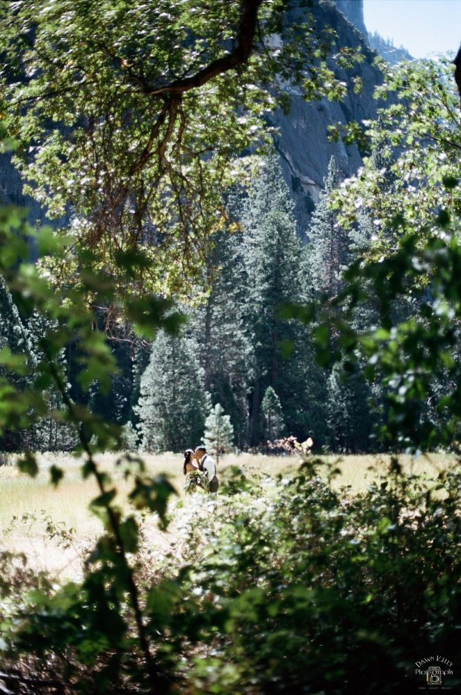 I love this shot because of all the texture and the beautiful trees in the back. Yosemite has so many different types of trees and plants, which makes it really fun to shoot there.
